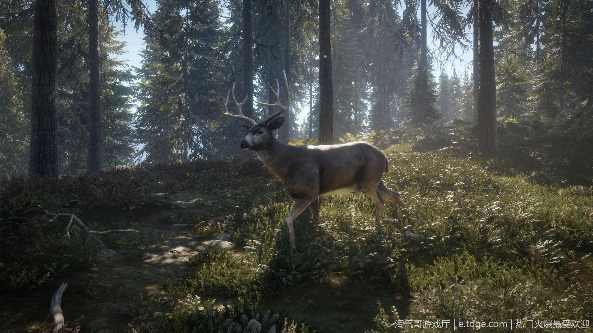 猎人:野性的呼唤/荒野的召唤 动作冒险 第20张